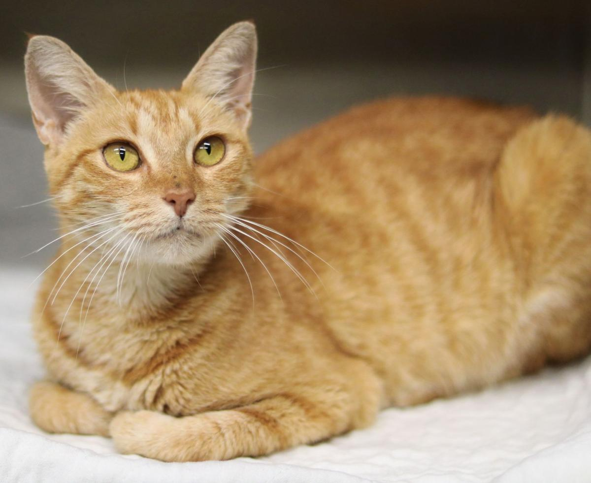SJ Cat of the Week - Oct. 16, 2019 edition