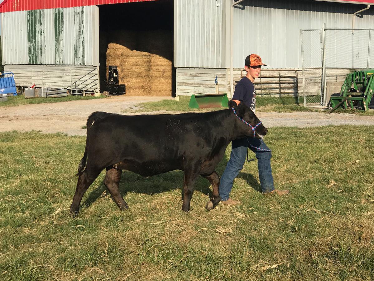 Polk County Calf Show Team 2018