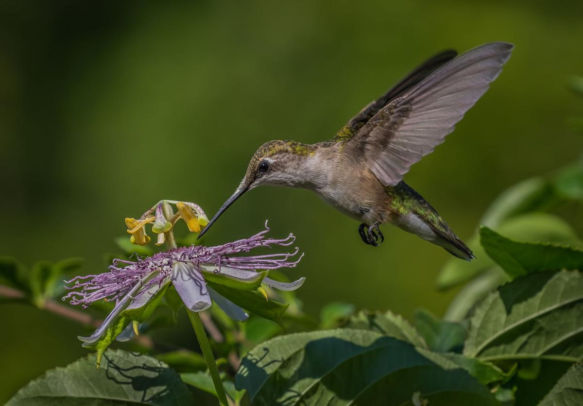 """""""Sanctuary at Berry: Wildlife Photography by Gena Flanigen"""