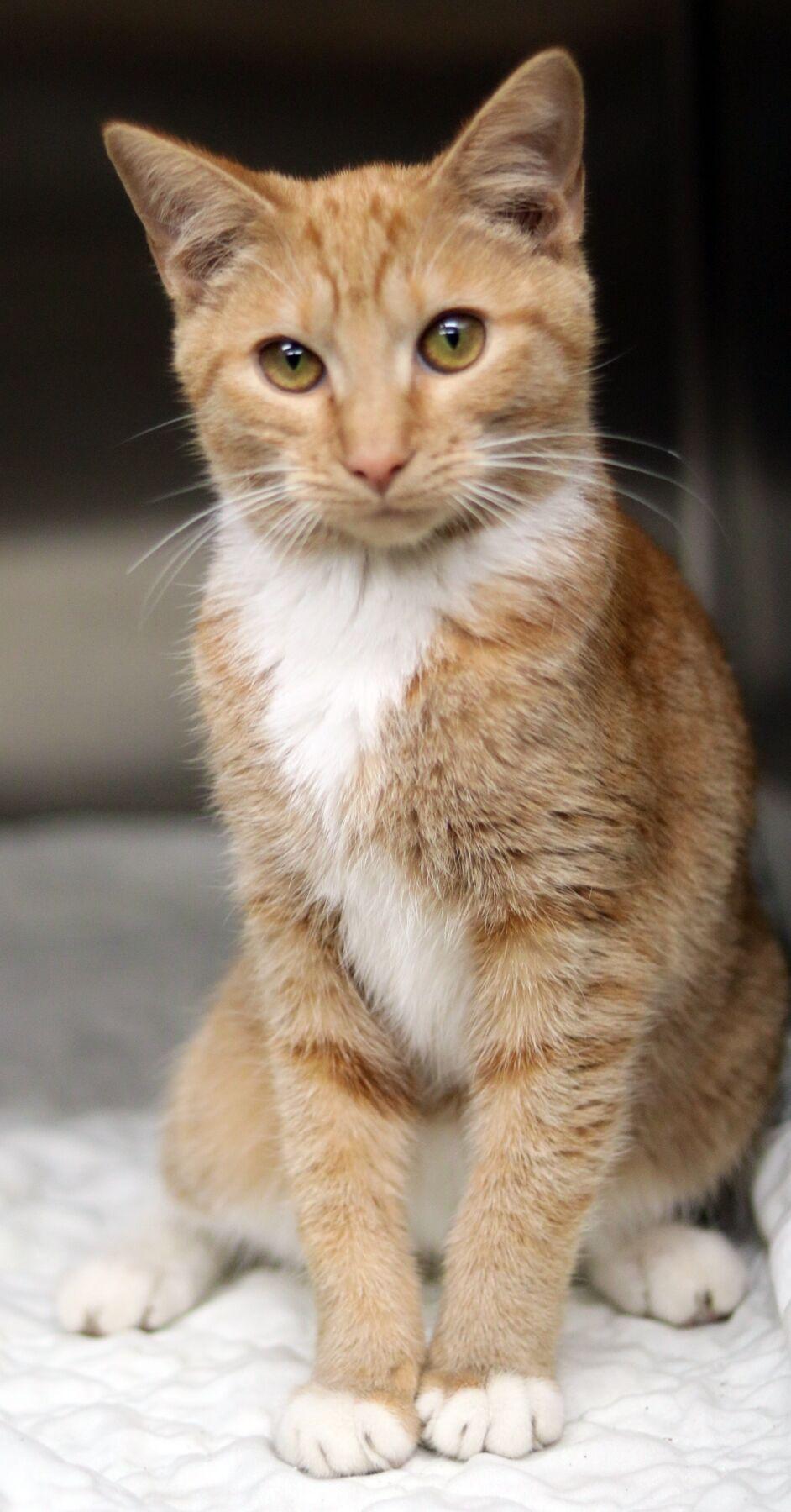 PSJ Cat of the Week