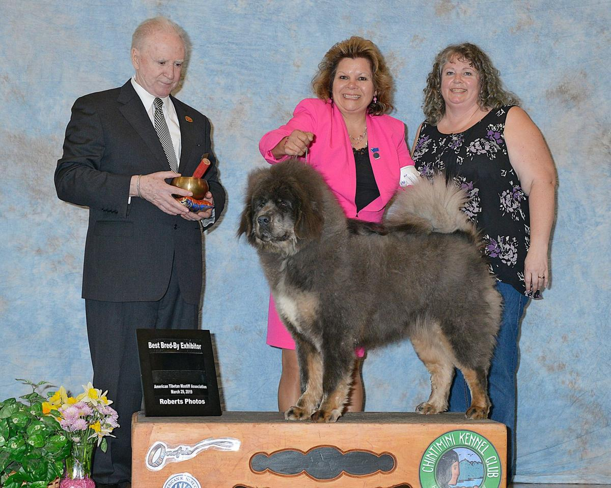Local dogs score big again in national competition