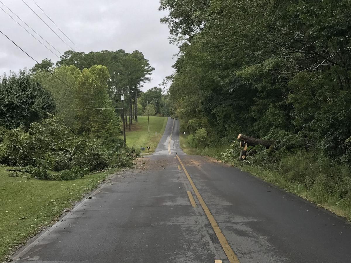 Tree collapsed