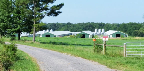 County approves changes to application process for new chicken houses, how nuisance issues handled