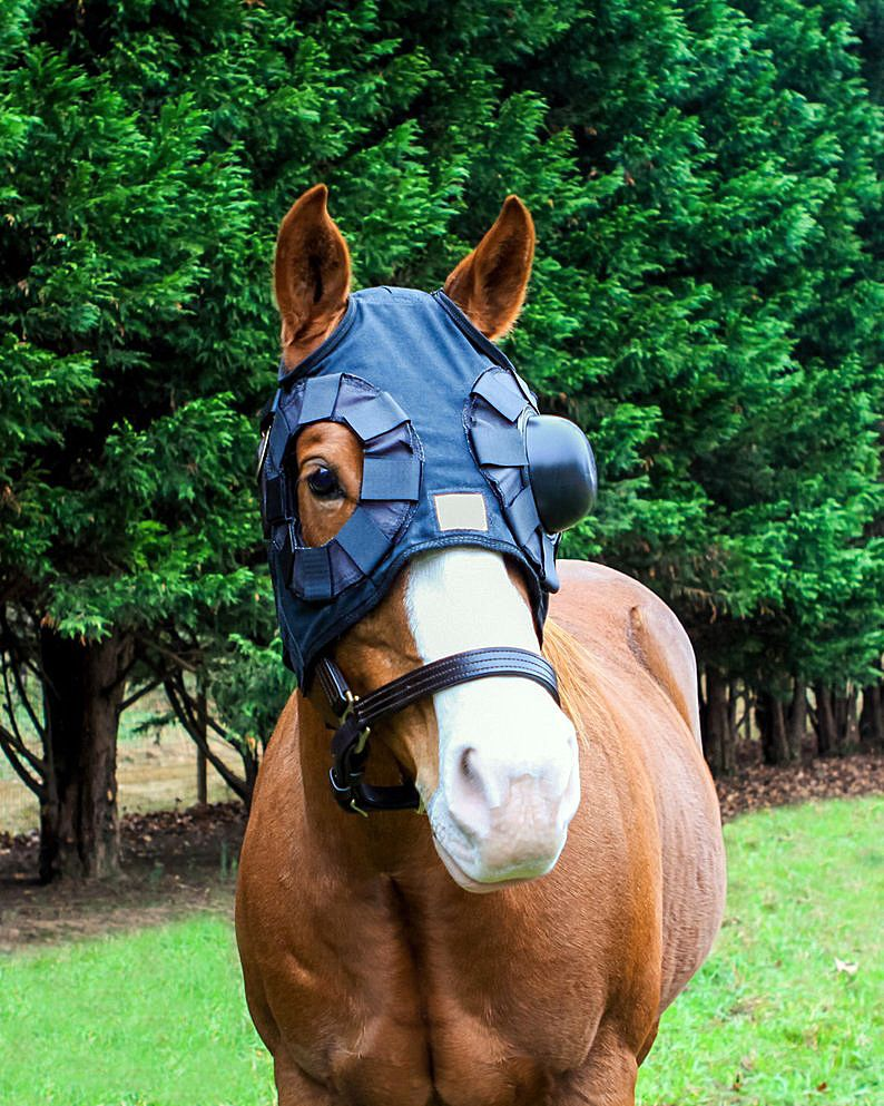 Local soaks in the success of her equine sun protection products