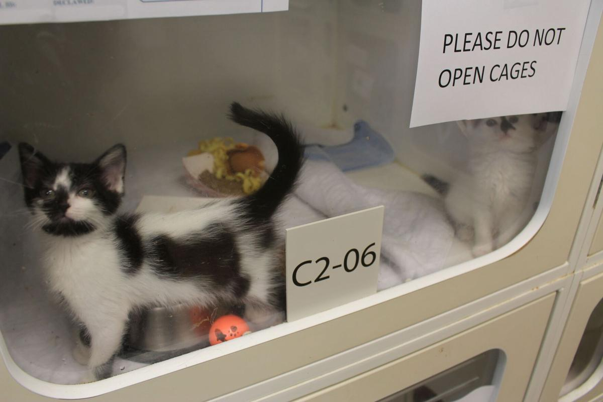 PAWS open with limited hours but plenty of animals looking for homes