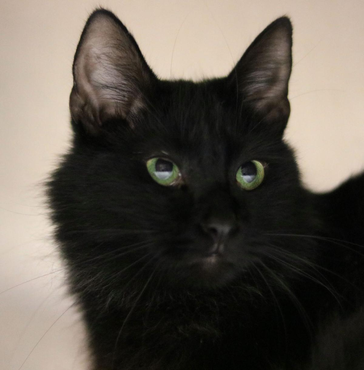 SJ Cat of the Week - May 22, 2019 edition