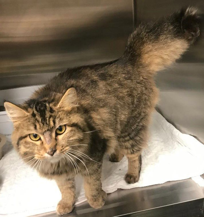 SJ Cat of the Week - March 25, 2020 edition