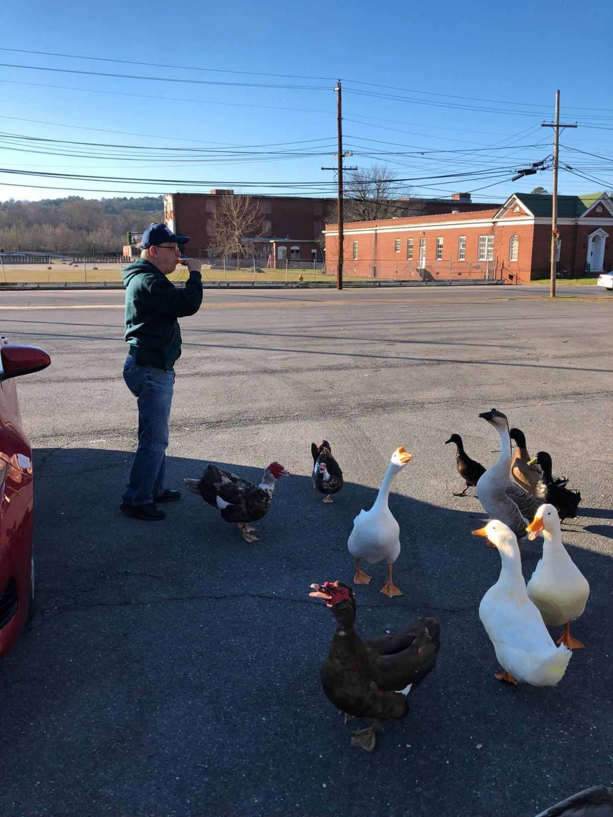 Rome couple feeds, names 24 Lindale ducks