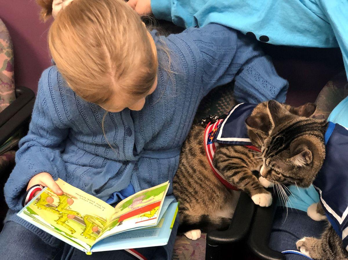 Girl reading to cats