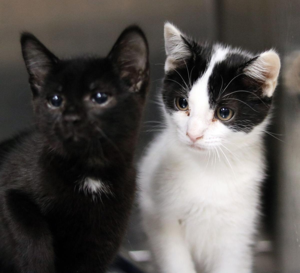 PSJ Cats of the Week