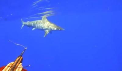 Tiburon amarillo - captura de pantalla - febrero 21 2019