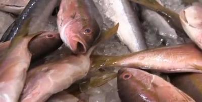 VIDEO: Se disparan precios de los mariscos y pescados en Semana Santa
