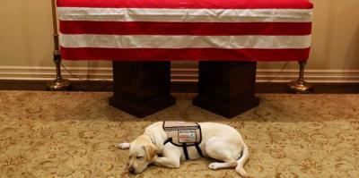 Bush - perrito - homenaje - diciembre 4 2018