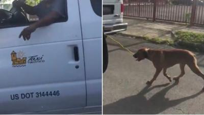 Taxi - perro amarrado - Foto suministrada - agosto 8 2019