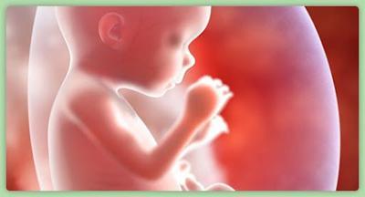 Bebe - vientre - febrero 11 2019