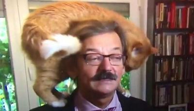 VIDEO: Gato interrumpe entrevista en vivo y causa furor en las redes