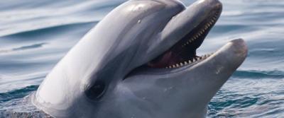 Delfin blanco - Foto via Pixabay - mayo 9 2019
