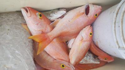 Pescados - Foto suministrada - marzo 29 2021