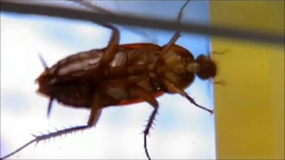 Cucaracha - Foto captura de pantalla - julio 2 2019