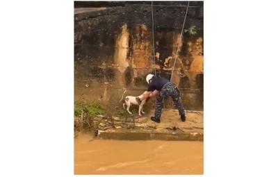 Perro rescatado en Bayamon de las inundaciones por la tormenta - Captura de pantalla - julio 30 2020