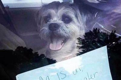 "FOTO: Perrito espera a su dueño escuchando ""Despacito"""
