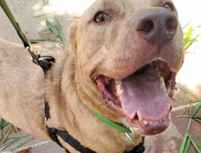 Perro - Santuario de Animales - Mayaguez - Foto via SASFA Twitter - julio 31 2020
