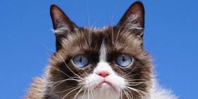 Grumpy Cat - mayo 17 2019