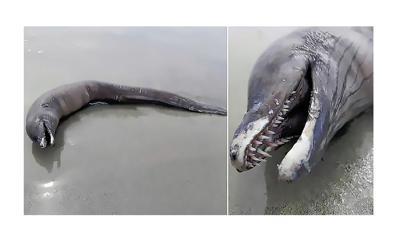 Criatura del mar - extraña criatura aparece en la orilla de una playa de Mexico - Captura de pantalla - febrero 25 2020