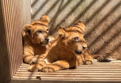 Chad y Malawi Zoologico de Mayaguez