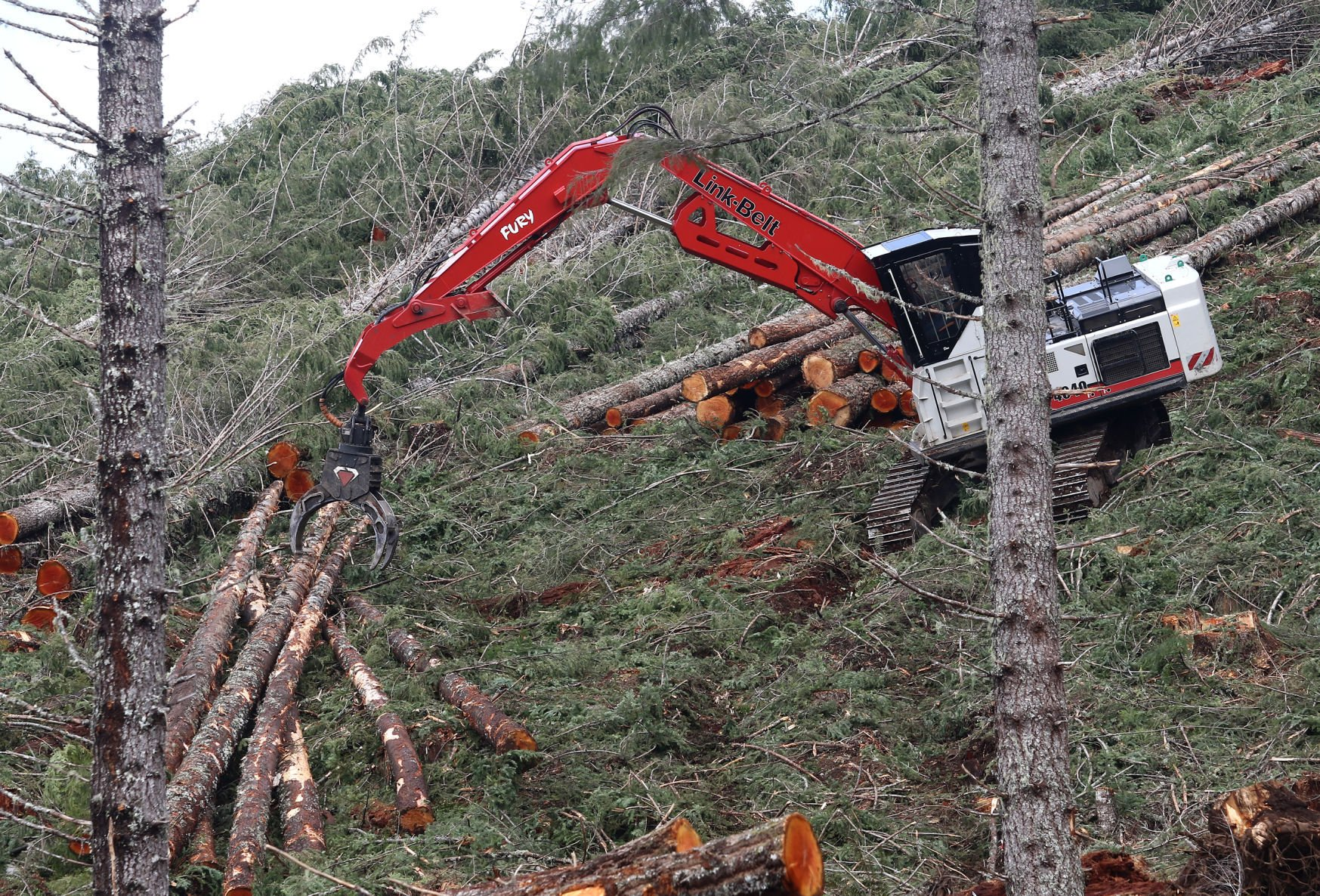 Technology of harvesting timber Environment