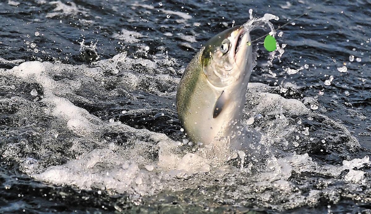 Coho Salmon Logging Lawsuit