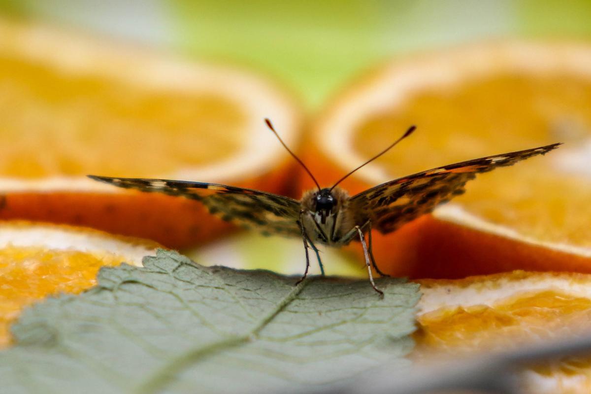 180527-nrr-butterflies-01