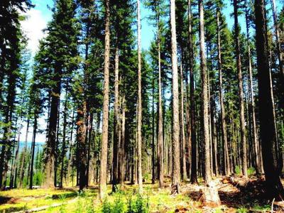 Timber file foto