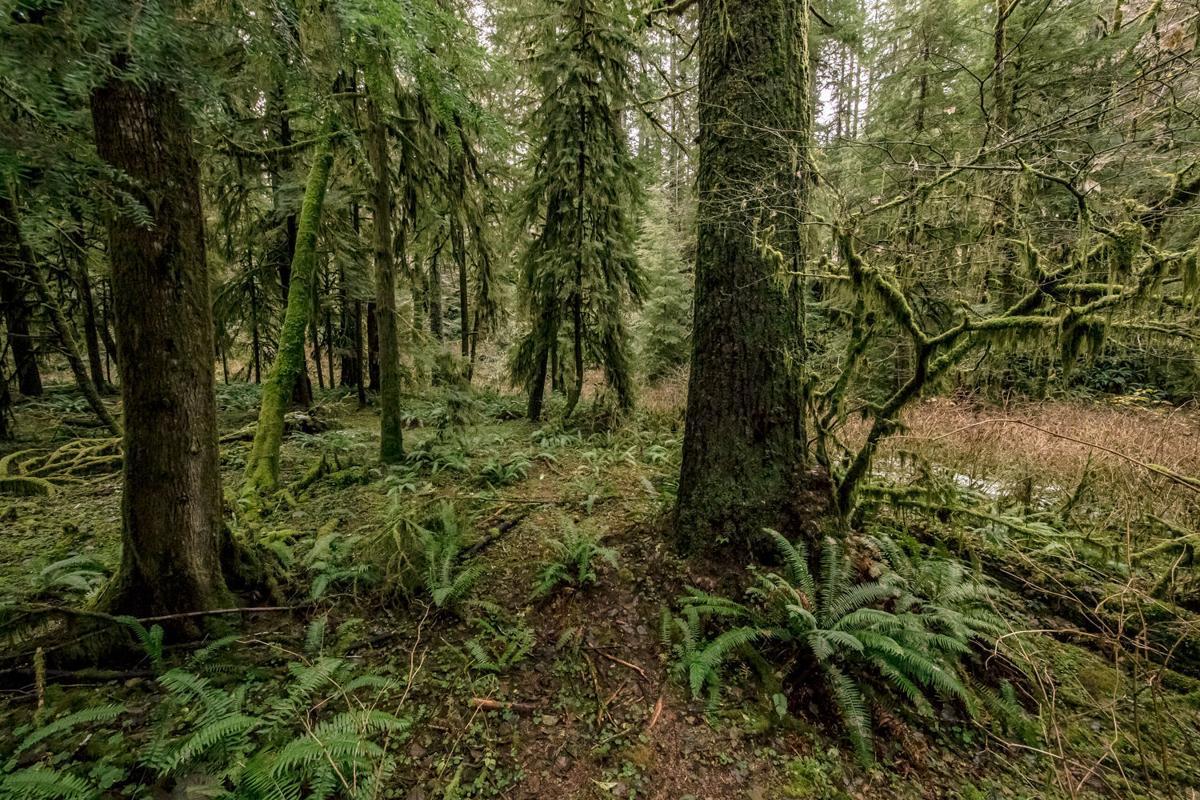 Elliott State Forest 2