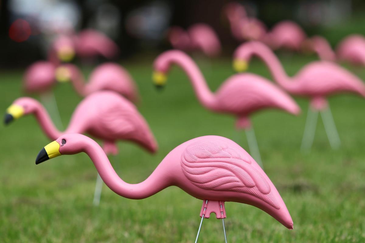 170407-nrr-flamingos-01