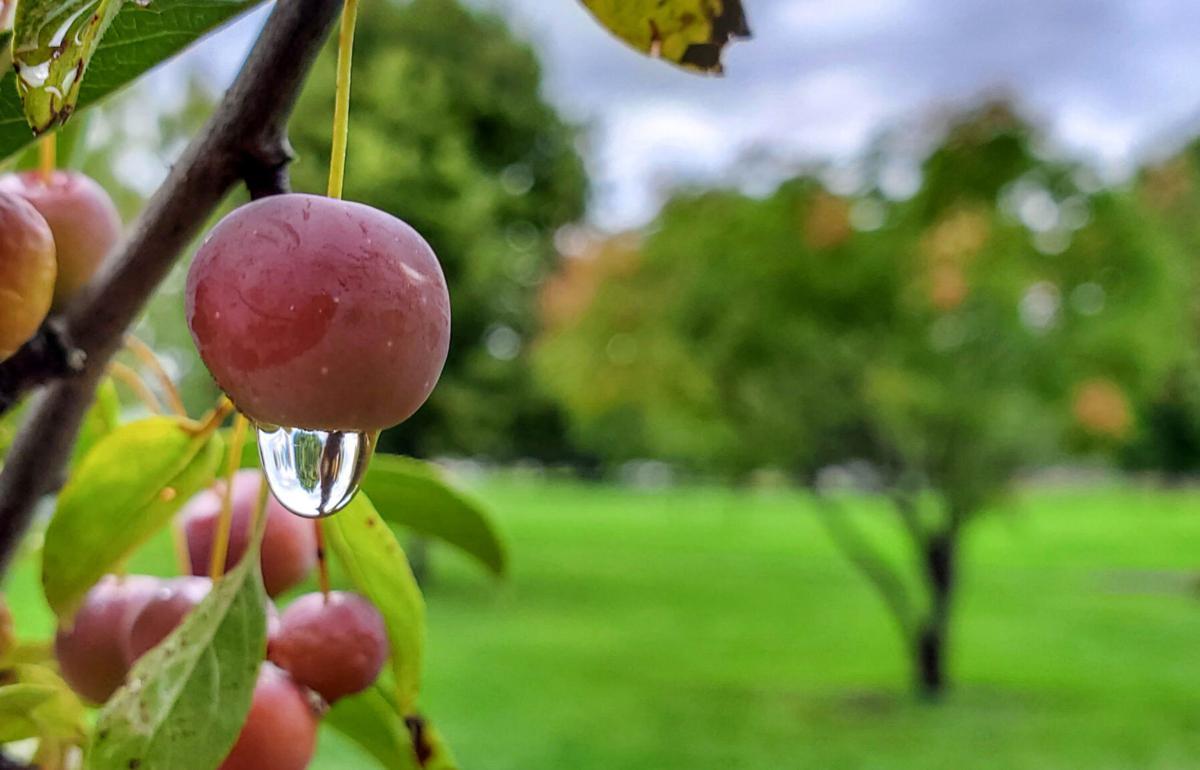 091820 lonely raindrop