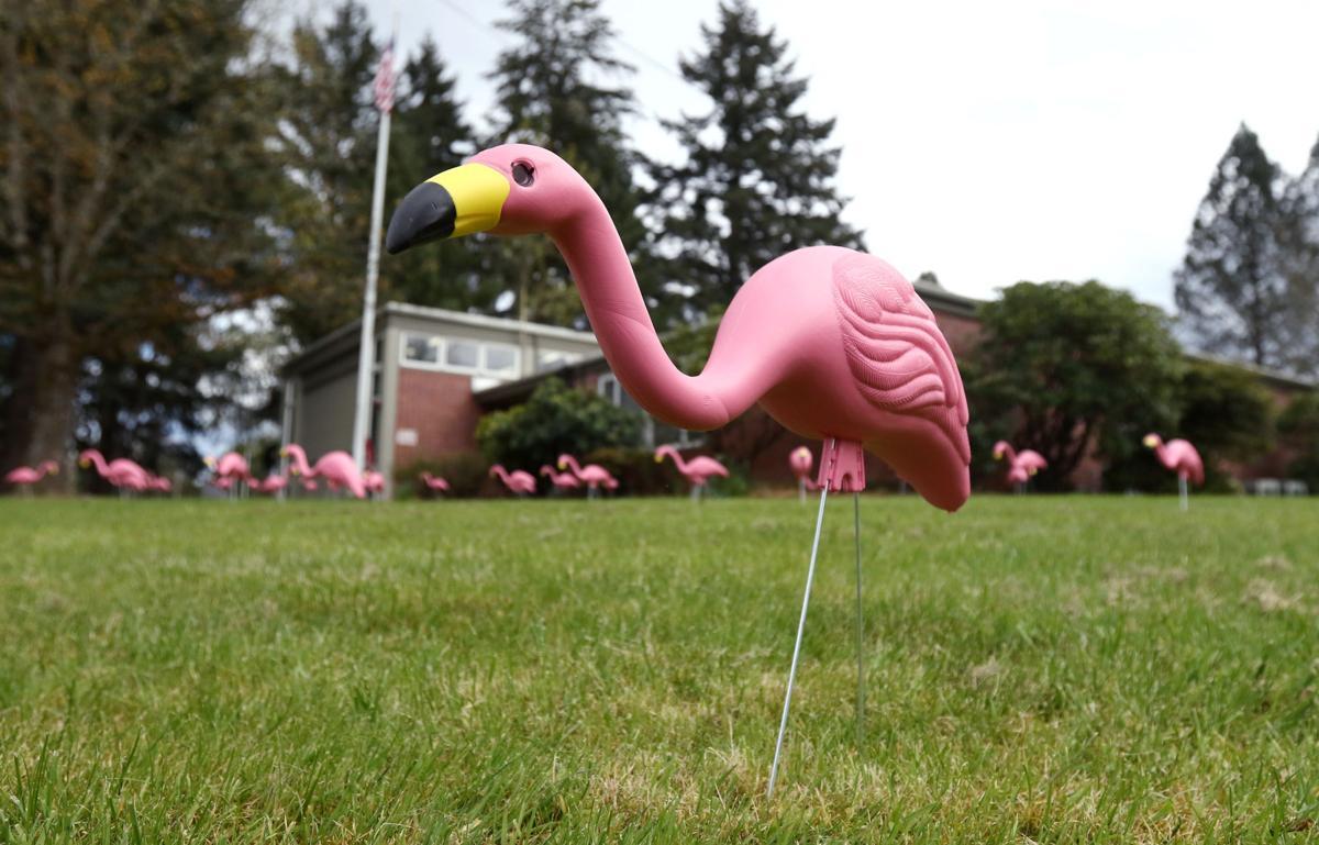 170407-nrr-flamingos-02