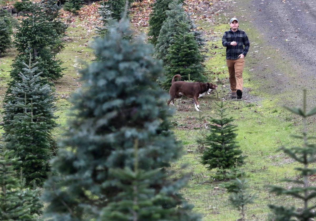 Local Christmas tree farms see success despite market shortage ...
