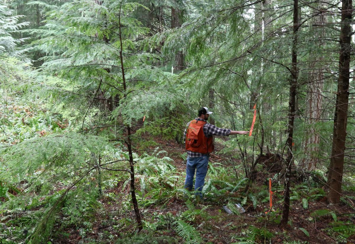 180511-nrr-loggingfolo-01