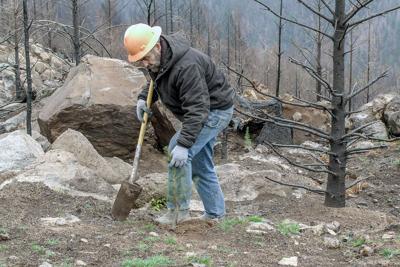 210328-nrr-reforestation