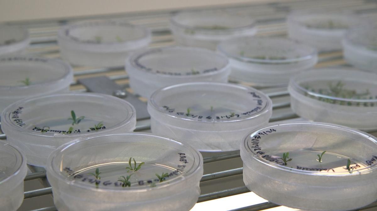 Science Says Gene Edited Food