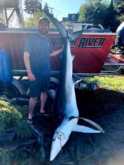 blue shark sept 2019.jpg