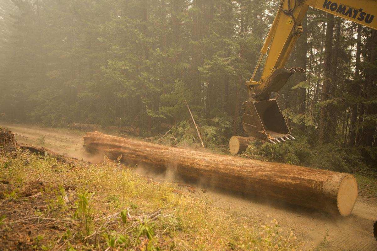 Moving-log-during-active-fire-Keri-Greer-2017.jpg