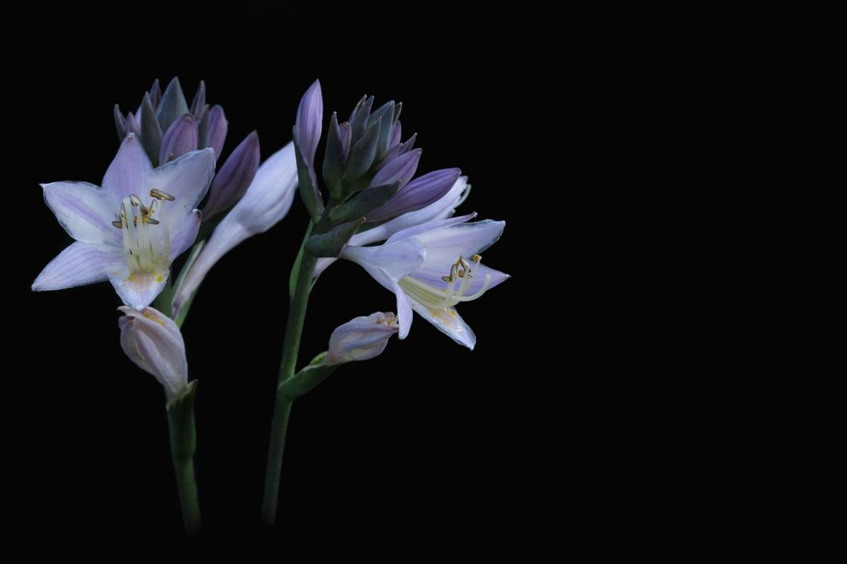 flowers_Pixabay.jpg