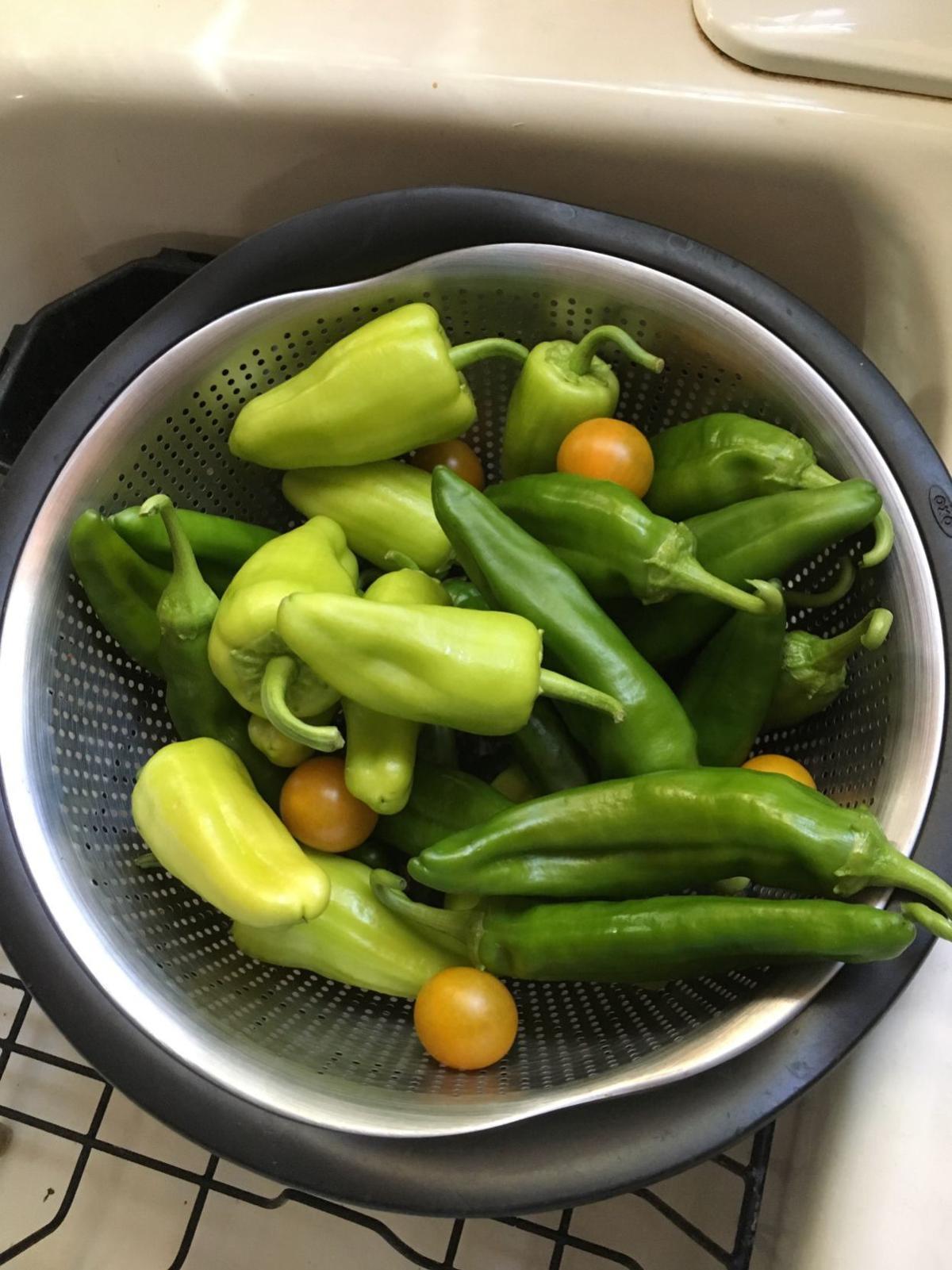 pepper_harvest_Bcourter.jpeg