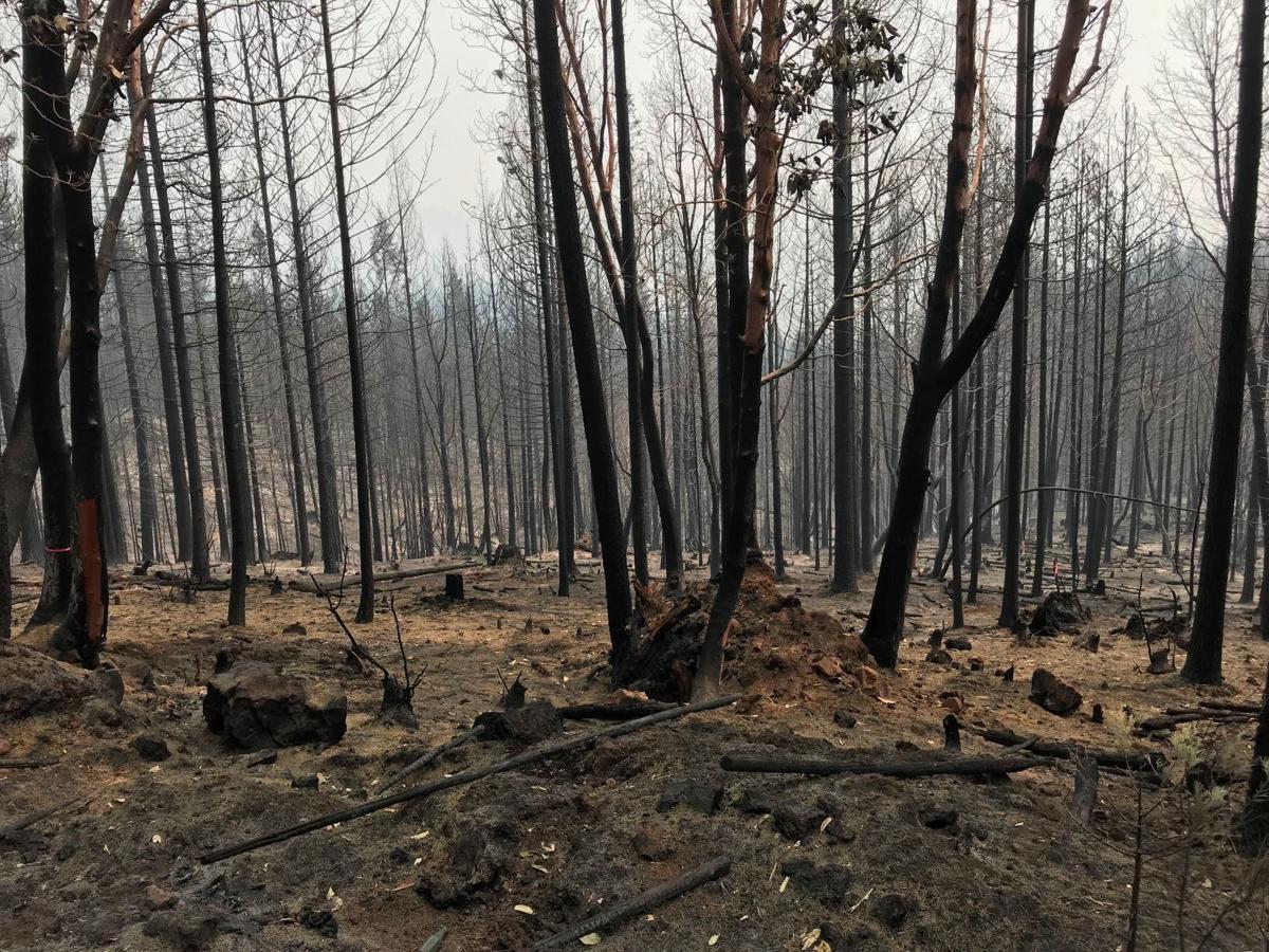 South Umpqua Complex Fire