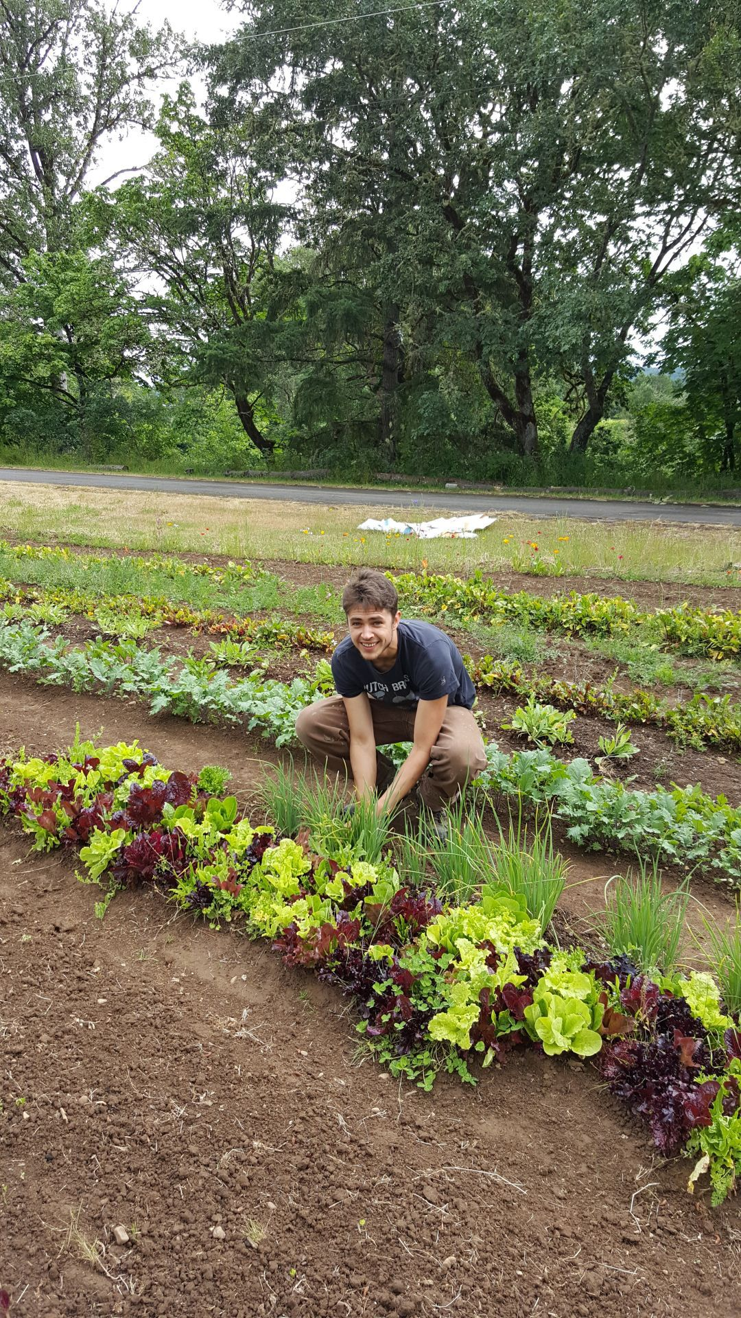 Rylan Guillen cultivating microgreens