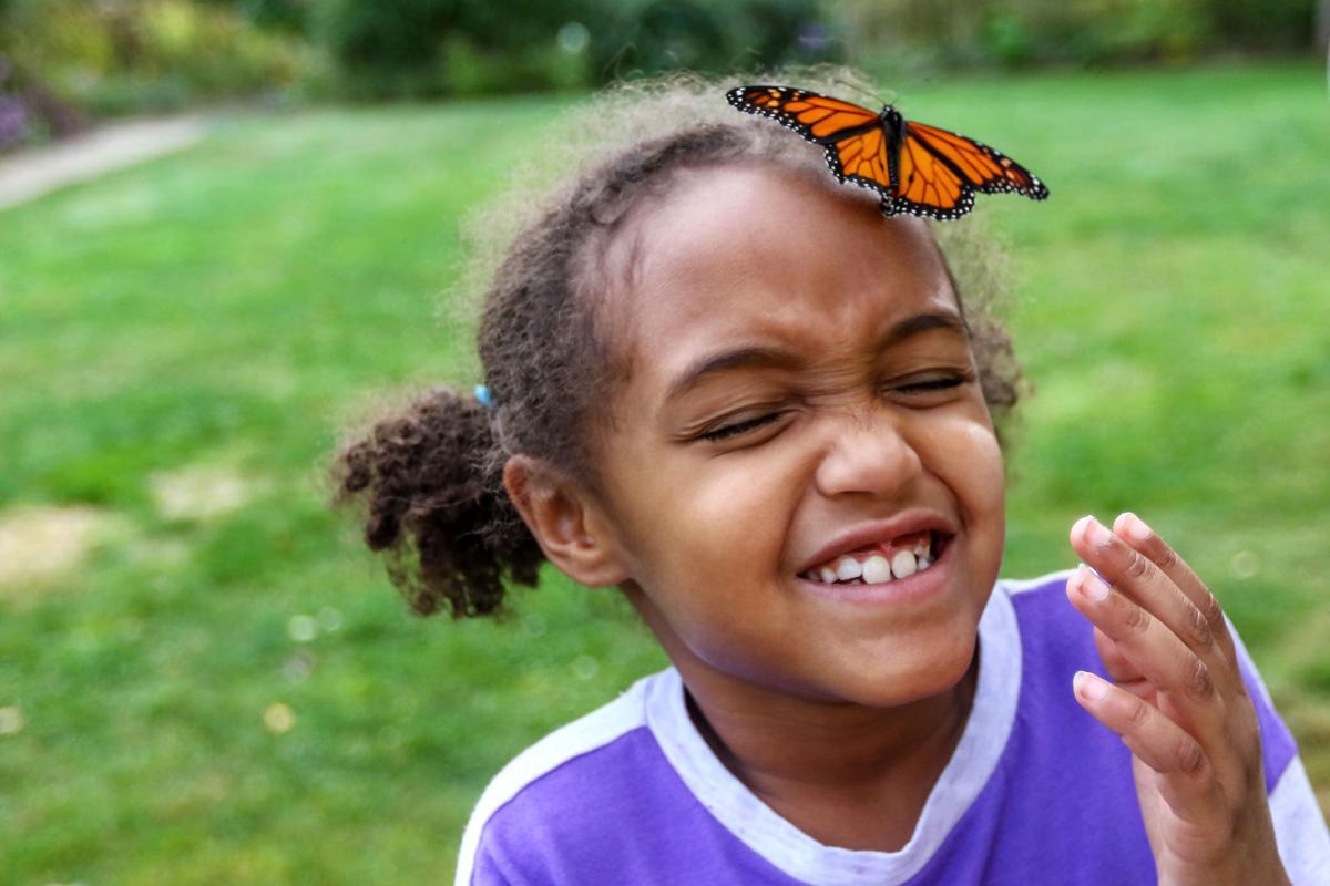 180923-nrr-butterfly-01