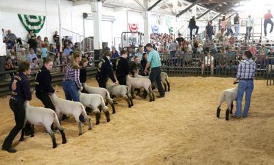 190602-nrr-lambshow-07 (copy)