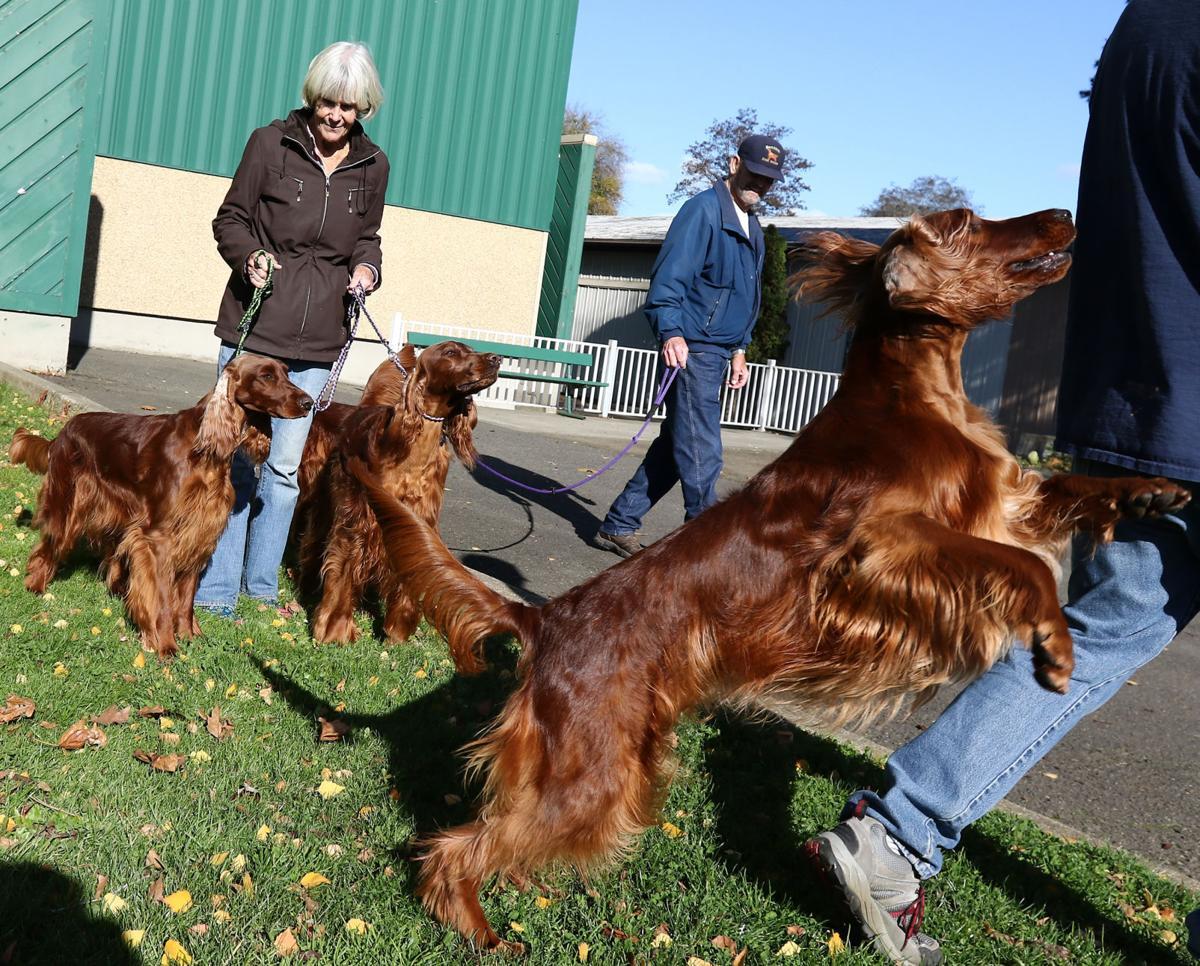 171115-nrr-dogshow-01